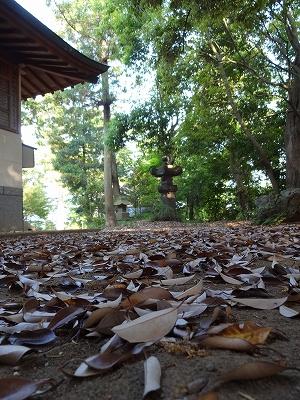常磐木落葉