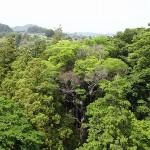 高所27メートルから眺める境内林