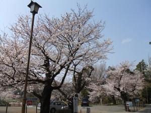 第二駐車場 ( 神社南側 )