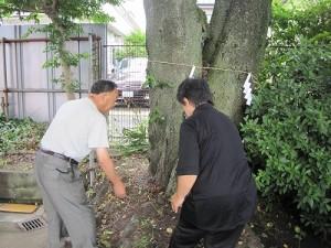 桜の伐木清祓