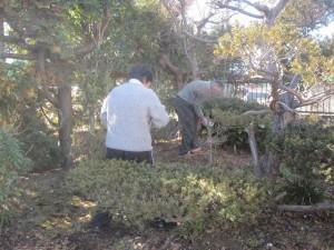 樹木伐採のお清め