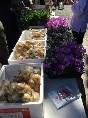 鉢花・野菜の無料配布