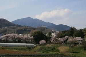 大山を背に招魂社の桜をながめる(昨年)