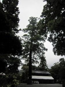 台風に揺れる境内の木々