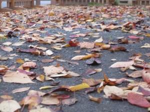 散りしく落ち葉