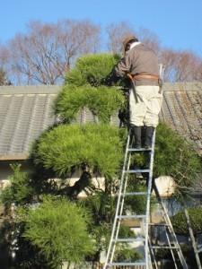 境内の植木の手入れ作業