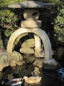 神池のカモも元気です