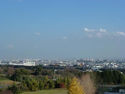 元宮から社叢を眺める