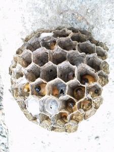 軒先の蜂の巣