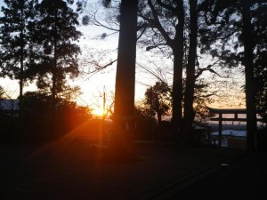 朝日の豊栄のぼり  参拝者撮影